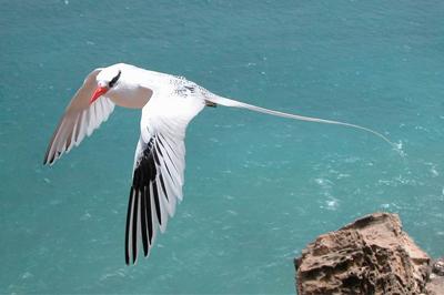 activities bird