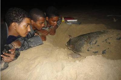 activities turtle