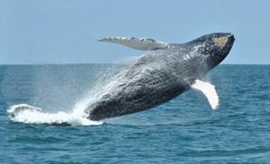 baleia 2