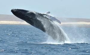 baleia 4