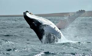 baleia 7